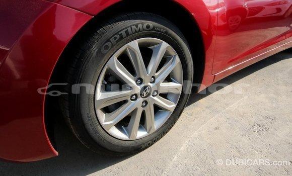 Buy Import Hyundai Elantra Red Car in Import - Dubai in Bumthang